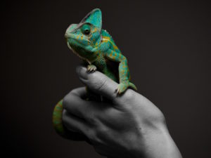 Person holding a chameleon